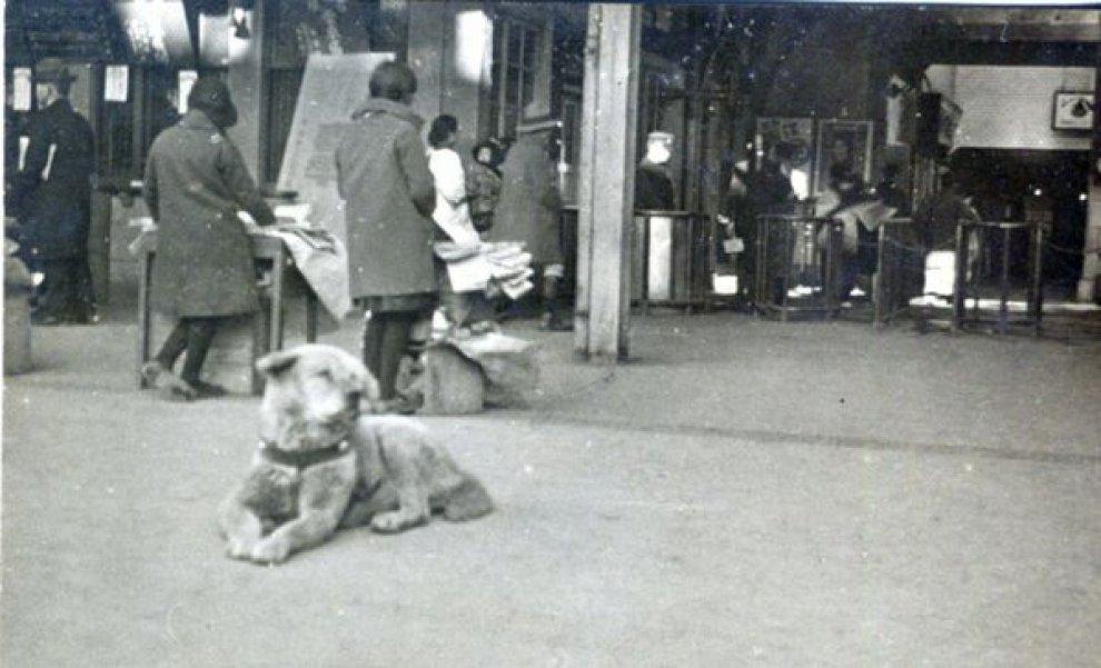 Hachiko il cane simbolo dell'amore e della fedeltà