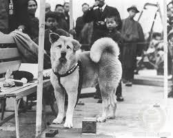 Hachiko: il cane simbolo dell'amore e della fedeltà verso l'uomo