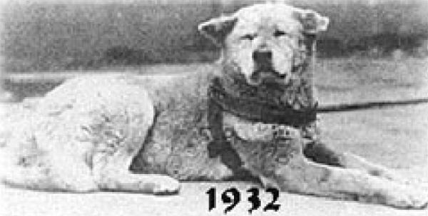 Hachiko: in un immagine del 1932
