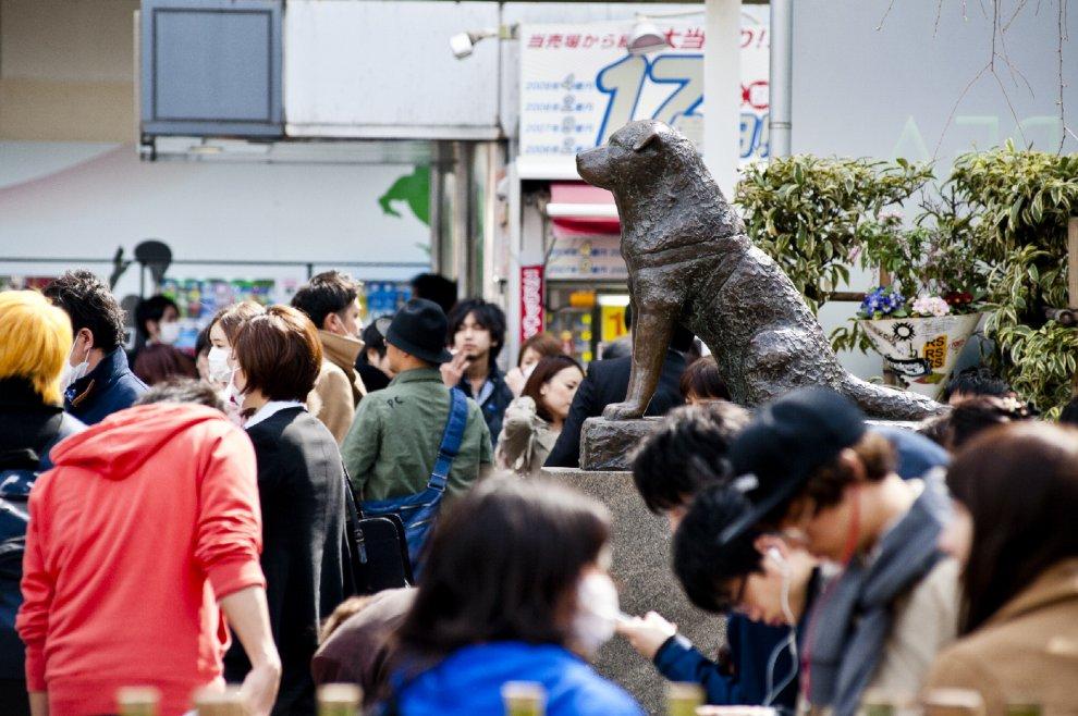 Hachiko il cane simbolo dell'amore e della fedeltà verso l'uomo