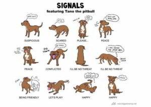 capire linguaggio cane