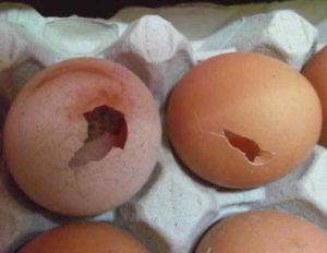 Lidl: uova fresche in stato di decomposizione maxi sequestro a Catania