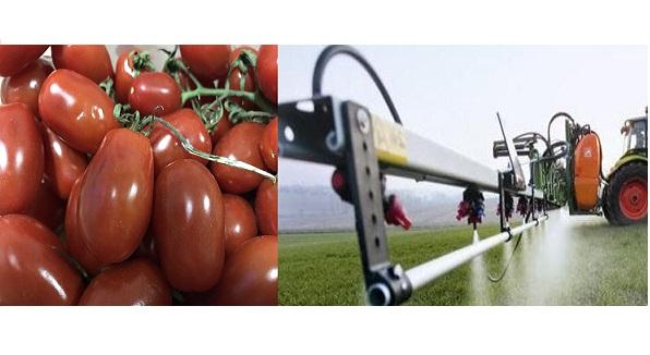 Croazia: pomodori italiani con pestidica ritirati dal mercato