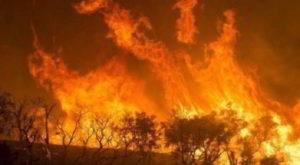 Incendi in Amazzonia: le proposte dei docenti dei diritti umani