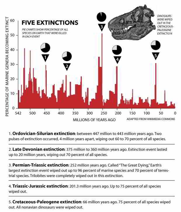 la sesta estinzione di massa forse in arrivo