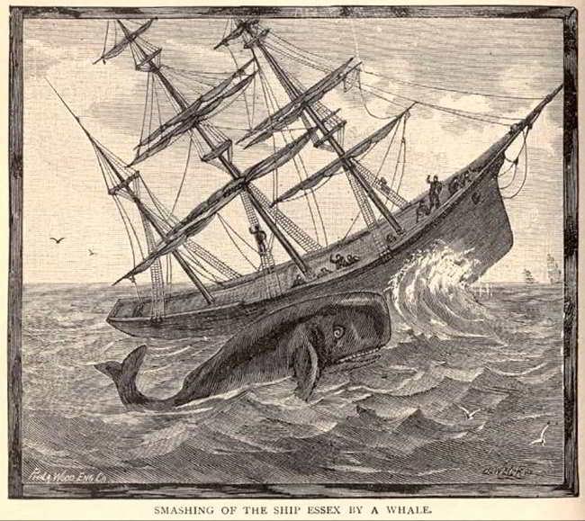 La storia dell'Essex: la balienera che ispirò Moby Dick