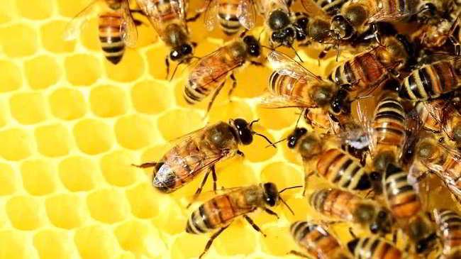 20 maggio 2020 - giornata mondiale delle api
